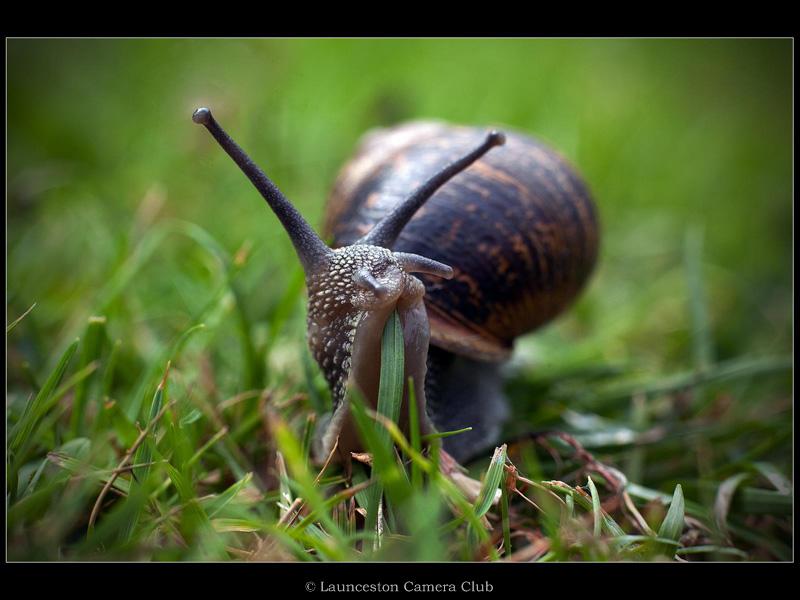 30 Ian Smith Garden Snail 3rd Place