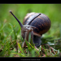 30 Ian Smith Garden Snail 3rd Place