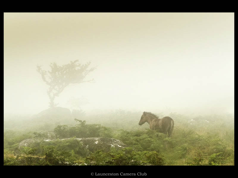 33 Pony in the Mist Heather Bodle