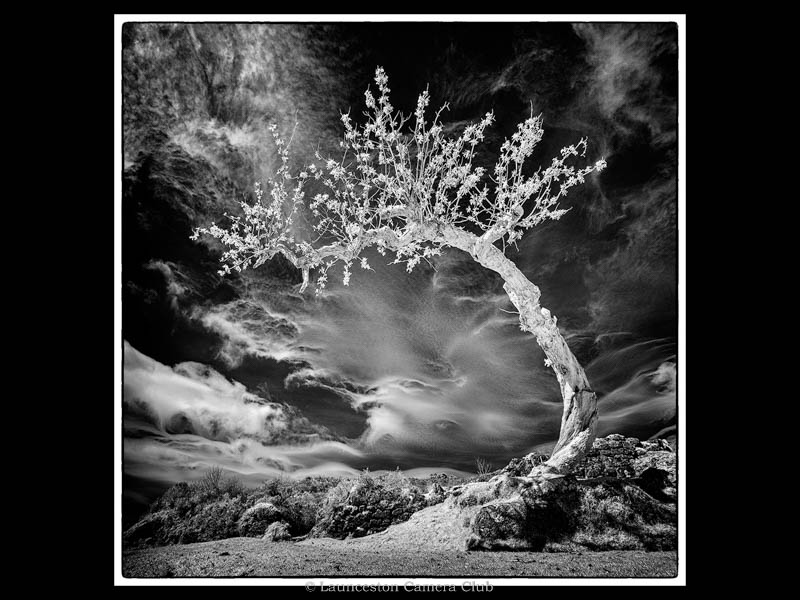P005-Lone Tree-Nick-Bodle-Launceston CC