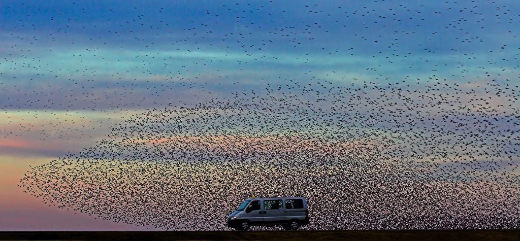 Starling Swarm