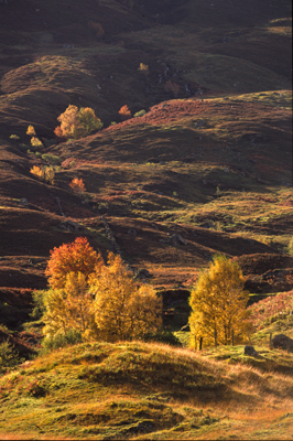 Autumn in Glen Dochart