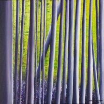 Bluebell woods 50x50 Acrylic