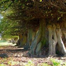 Great Bealings Suffolk