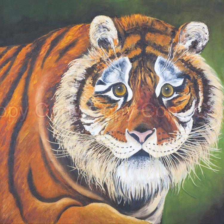 Siberian Tiger 60x60 Oil on canvas