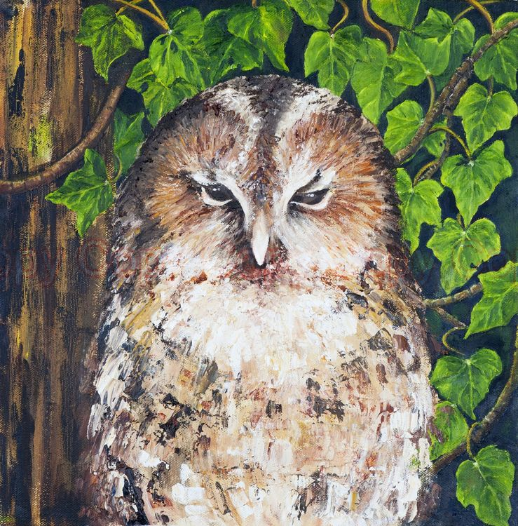 Barn Owl 30x30 Oil on canvas