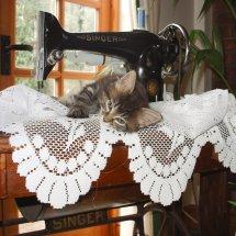 Kitten sewing