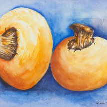 Mushrooms 36x43 Watercolour