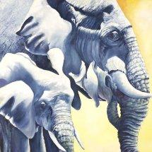 Elephants Oil on Canvas 75x75