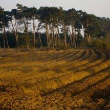 Rendlesham Forest Suffolk