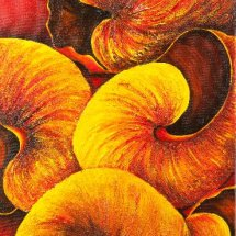 Sizzling snail shells 30x60 Acrylic