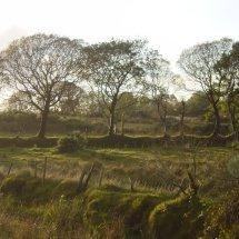 Trees Co Mayo Ireland