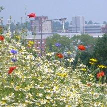 Urban Landscape Ipswich