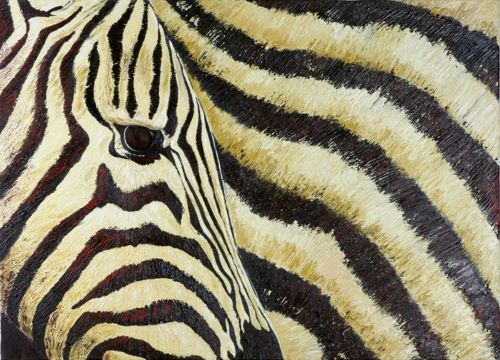 Zebra 50x70 Oil on canvas