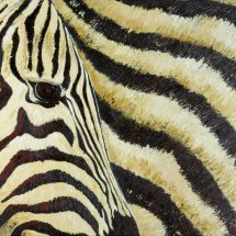 Zebra 50x70 Oil on canvas