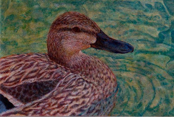 Female Mallard, Egg tempera, bird, water, painting, feather,