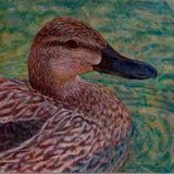 Female Mallard, Egg tempera, bird, water, painting, feather,