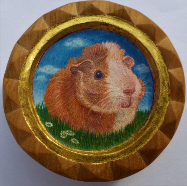 Guinea Pig -Kotoha 1-