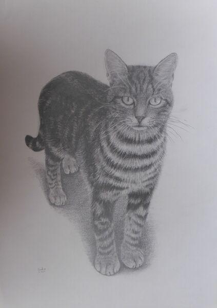 Eiko Matsuura Drawing Tuscan cat Graphite on paper 2020 42 x 29.7 cm