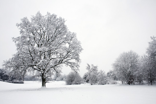 Tree in Snow II....