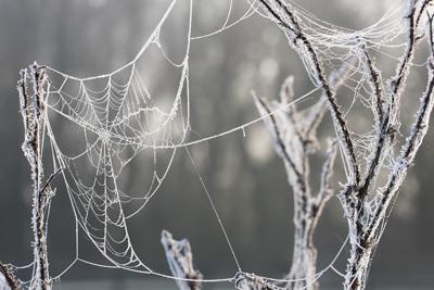 Frosty Webs....
