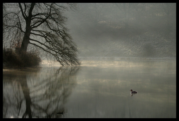 Grebe on Lake...