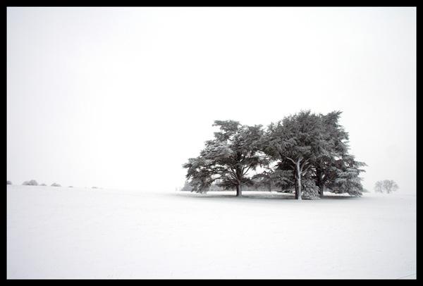 Snow Scene...