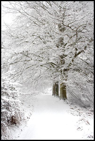 Snow Path...