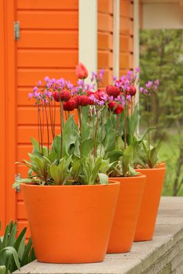 Orange pots