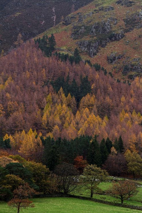 Autumn in Buttermere