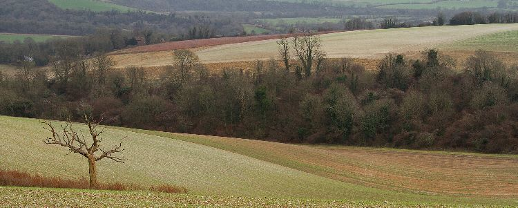 Bury Hill in Autumn