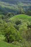 Spring Greens Yorkshire Dales