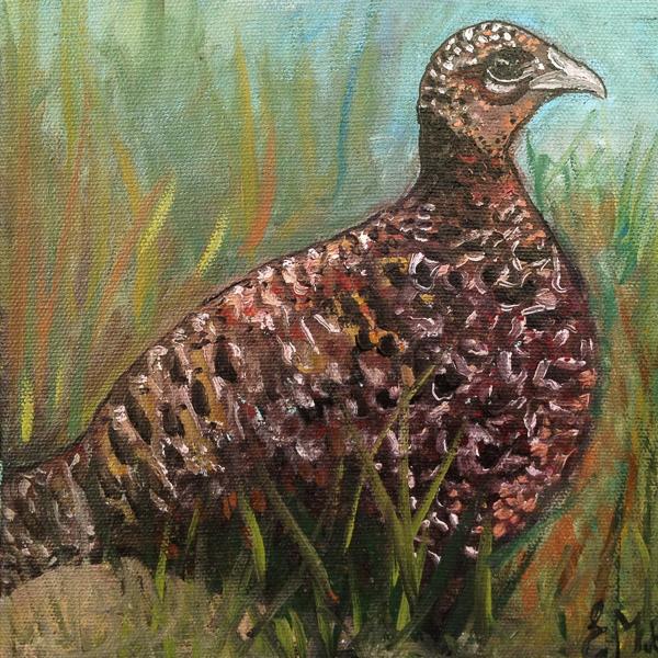 - Pheasant -