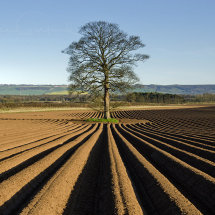Ploughed field at Wykeham