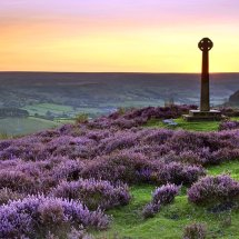 Rosedale Abbey heather