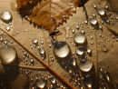 Fly and a Rain Marble