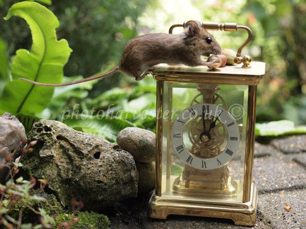 Mouse With Hazelnut on Clock -2