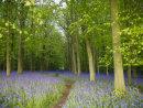 Dockey Wood, Ashridge