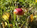 Magic Mushroom?
