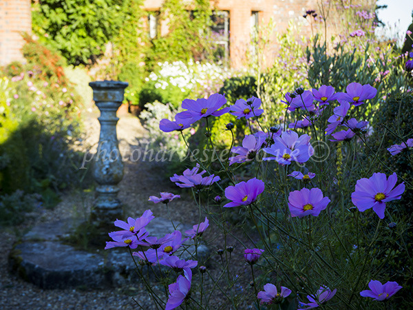 Sundial and Cosmos at Chenies