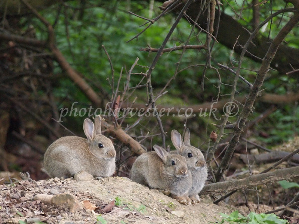Easter Bunny Conference