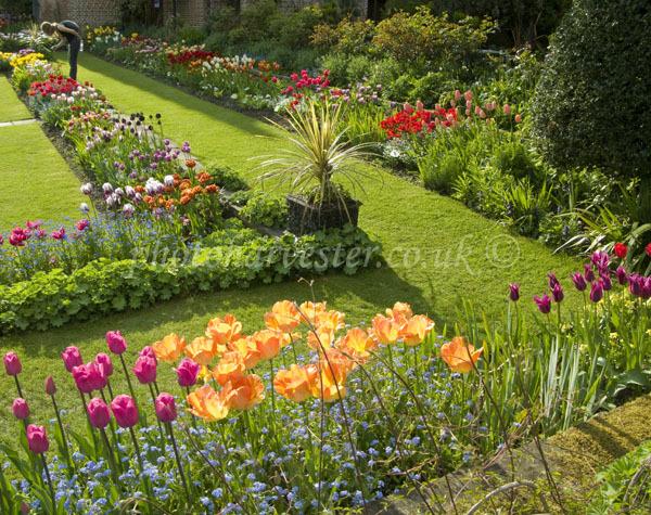 Tulip diagonal, Manor Garden in Spring