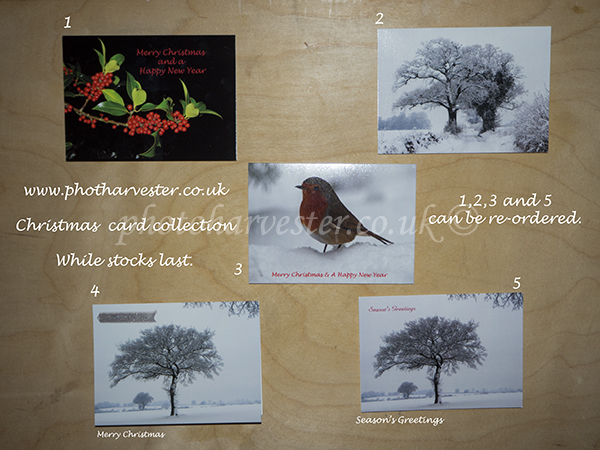 A6 Christmas card selection.