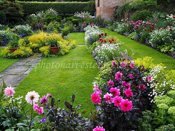 Carmine Dahlias in the Sunken Garden at Chenies in July