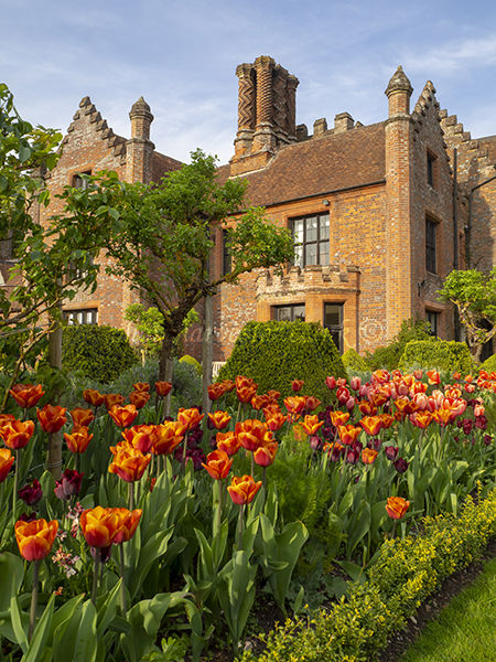 Portrait view of Chenies Manor with orange and maroon tulips