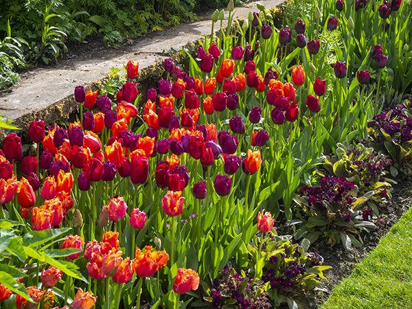 Chenies Tulip Tapestry