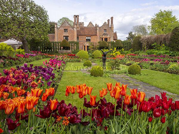 Chenies Sunken Garden Tulips
