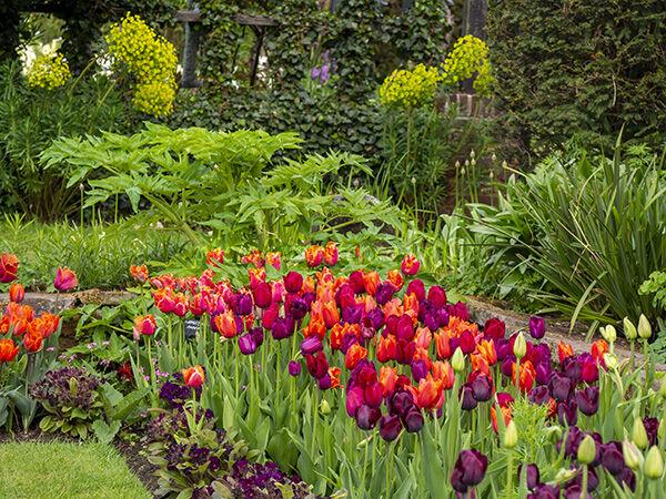 Chenies Garden Tulip Corner