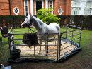 Unicorn at Hunton Park