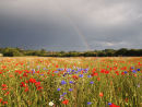 Rainbow over Poppies